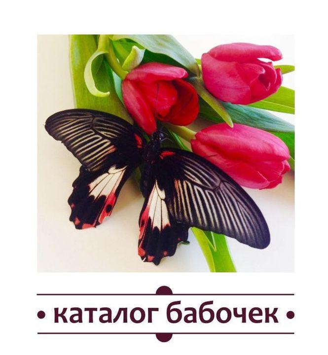 живые бабочки в томске. каталог.