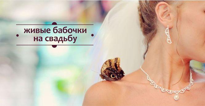 Живые бабочки на свадьбу. Томск. т. 8-953-921-08-14